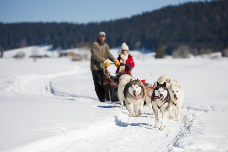 800x600 chien traineau haut jura 4207 - La Neige arrive, les vacances aussi !!
