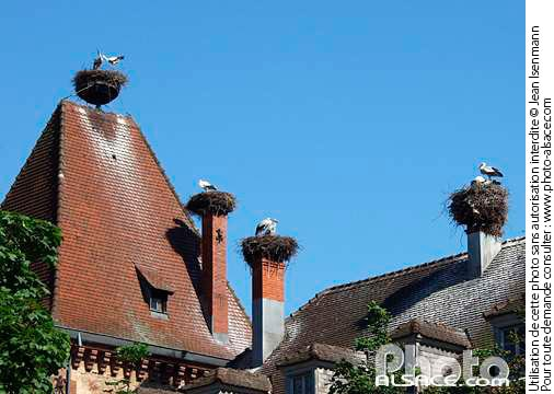 e1432 - Munster, Vosges, Colmar